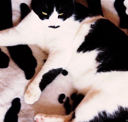 seduzione gatto