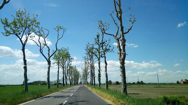 alberi capitozzati