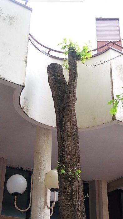 alberi deturpati