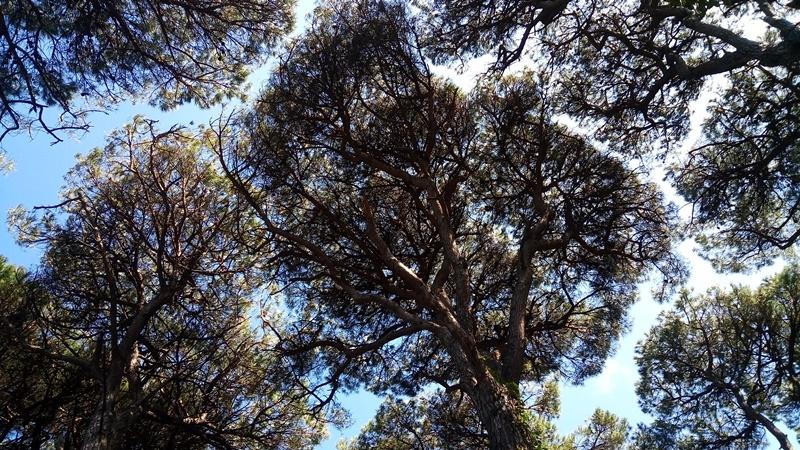 gli alberi sentono