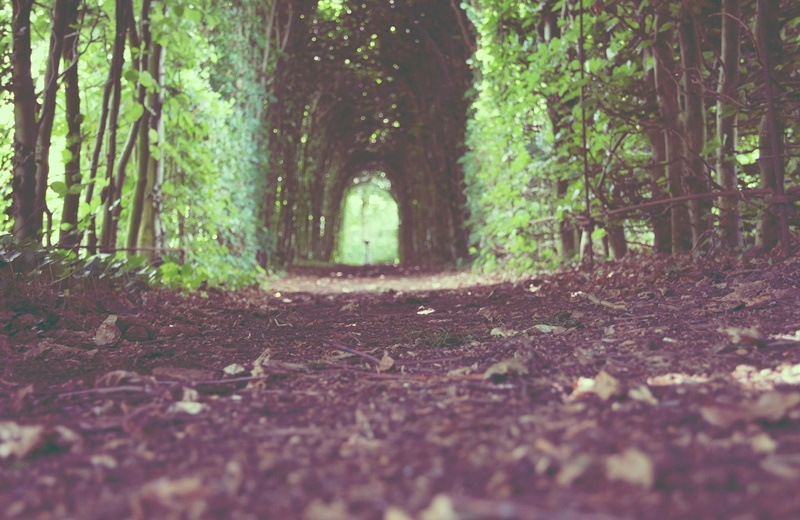 il bosco e la donna
