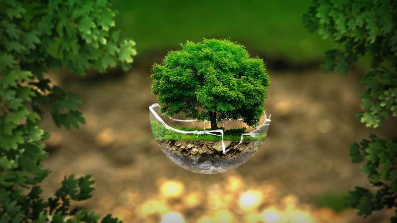 silvoterapia e alberi