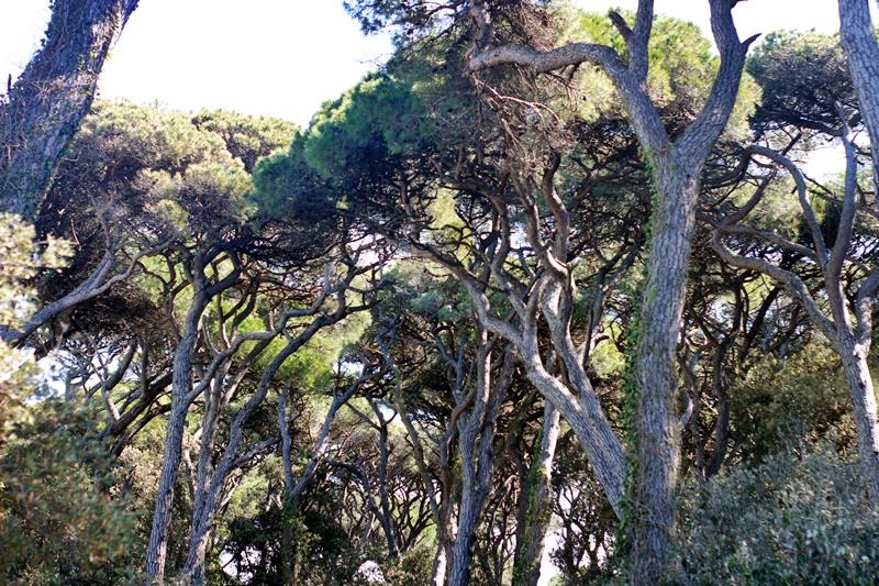 polmoni verdi della terra