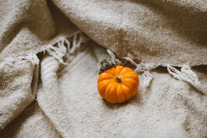 Halloween e le zucche