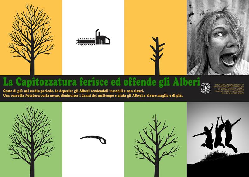 capitozatura alberi e scempi urbani