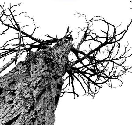 albero morto