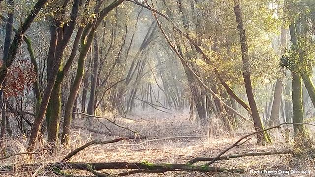 soli nel bosco