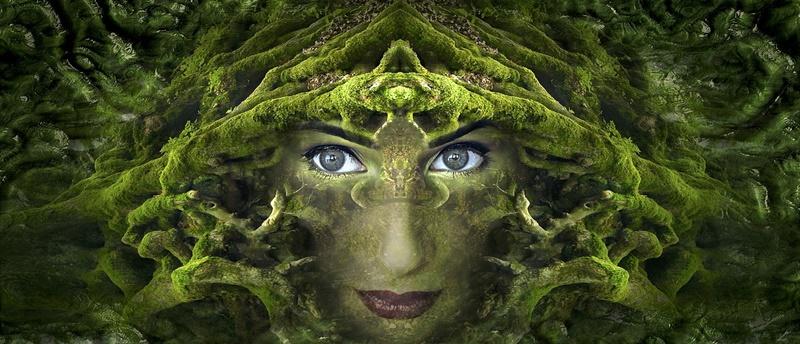 alchimia verde e le piante