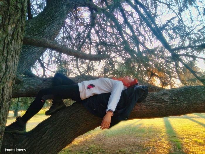 noi e gli alberi