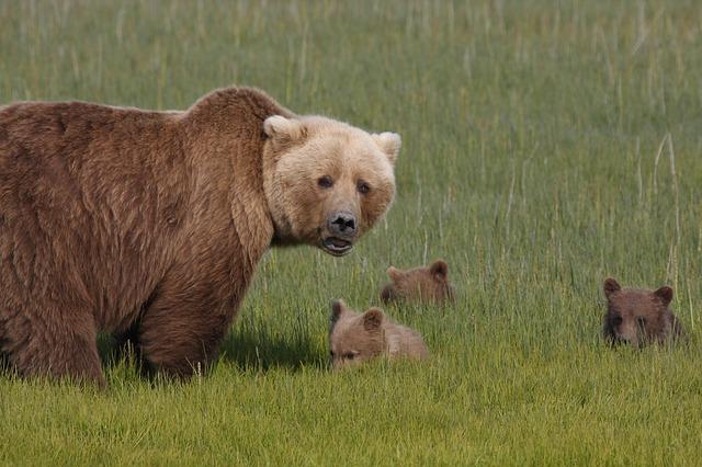 incontri ravvicinati con orso