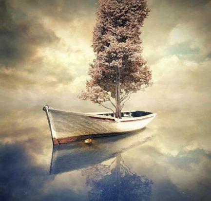 piantare un nuovo albero