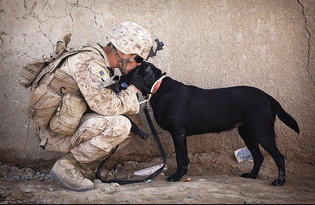 cani e amore