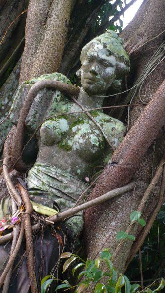 alberi sacri