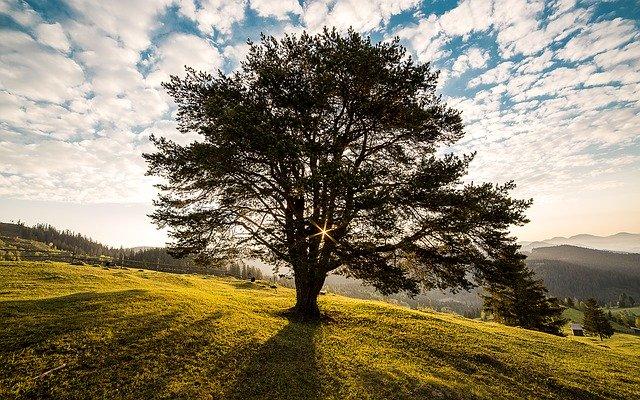 sacralità degli alberi