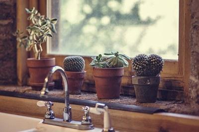 cactus radiazioni