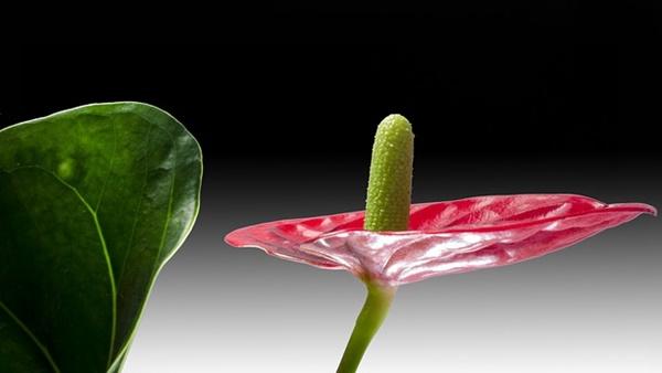 pianta da interni